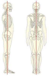 解剖学的基本の肢位